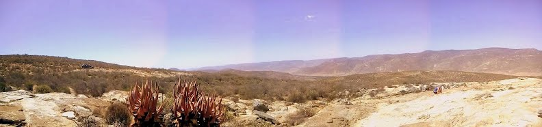 Springbok view of the Landscape